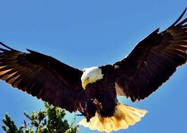 Kenali Arti Bermimpi Tentang Berbagai Jenis Burung